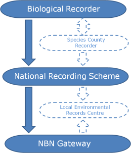 NRS Data Flow